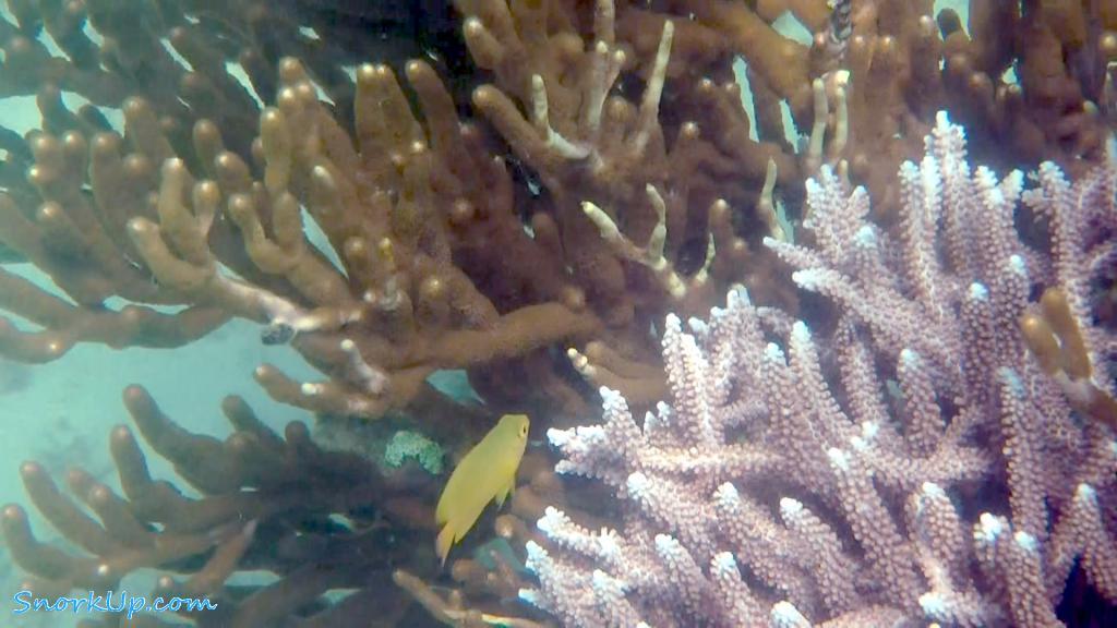 Подводный мир о.Бидадари - зарисовки